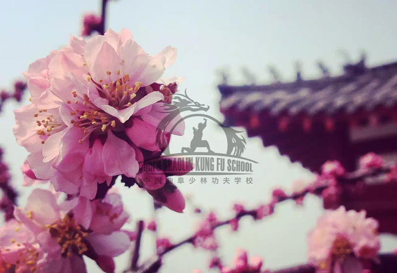 spring in china